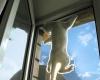 Крепление сетки на окно становится особенно актуальным к лету